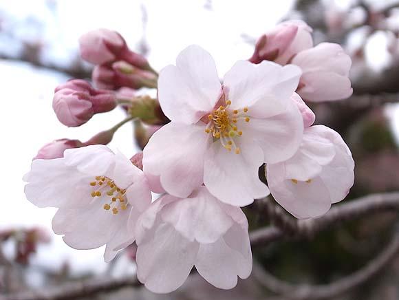 🌸花と団子🌸